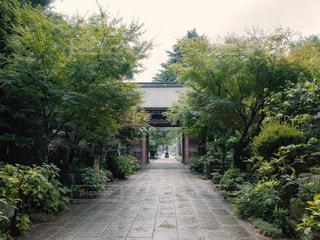 木々に囲まれた門の写真・画像素材[1796590]