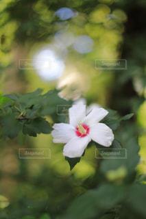 庭園に咲く花の写真・画像素材[1798488]
