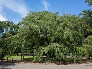 青空の下の木の写真・画像素材[1798489]