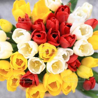 チューリップの花束の写真・画像素材[1803628]