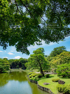 庭園の写真・画像素材[1803631]