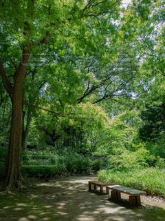 公園ベンチの写真・画像素材[1803634]