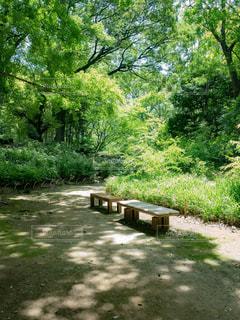 公園のベンチの写真・画像素材[1803635]