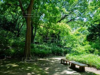 木陰のベンチの写真・画像素材[1803638]
