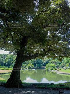 池と木の写真・画像素材[1803639]