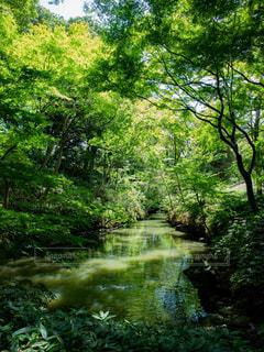 みどりの小川の写真・画像素材[1812923]