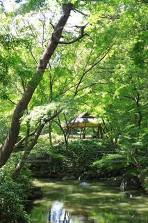 公園の小川の写真・画像素材[1812924]