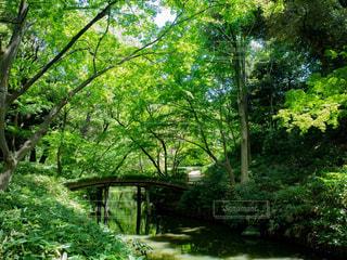 庭園内の橋の写真・画像素材[1812931]