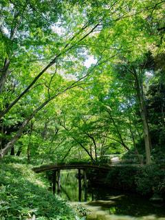 緑に囲まれた橋の写真・画像素材[1812934]