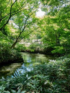 木陰の小川の写真・画像素材[1812936]