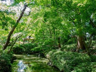 小川のある庭園の写真・画像素材[1812951]