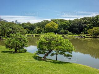 松の木と池の写真・画像素材[1813449]