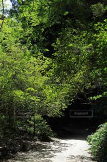 森の道の写真・画像素材[1813450]