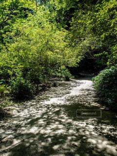 緑の中の道の写真・画像素材[1813452]