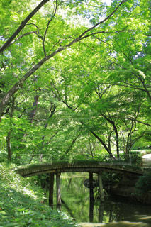 小川にかかる橋の写真・画像素材[1813457]