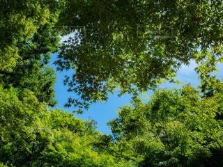 木々の隙間から見える空の写真・画像素材[1813458]
