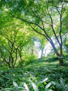 マイナスイオンの森の写真・画像素材[1813960]