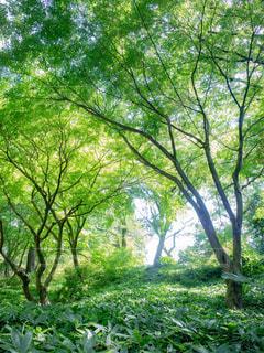 マイナスイオンの森の写真・画像素材[1813961]