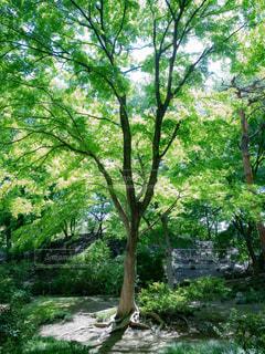 日差しを浴びる木の写真・画像素材[1813963]