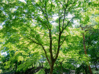 木のアップの写真・画像素材[1813965]