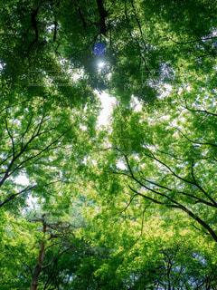 緑と太陽の写真・画像素材[1813967]