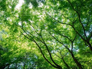 緑と枝の写真・画像素材[1813968]