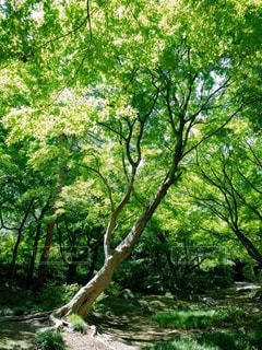 生い茂る樹木の写真・画像素材[1813970]