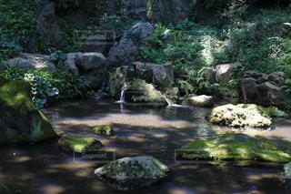 岩ある池の写真・画像素材[1814633]