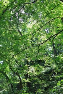 マイナスイオンある森の写真・画像素材[1814639]