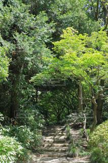 林道の写真・画像素材[1814642]