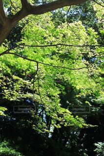光差す樹木の写真・画像素材[1814643]