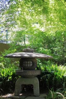 木の下の石灯籠の写真・画像素材[1814652]