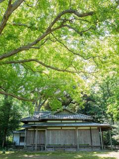 木の下にある家の写真・画像素材[1814657]