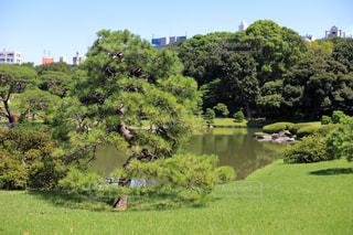 広大な庭園の写真・画像素材[1814661]
