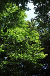 マイナスイオンある森の写真・画像素材[1814663]