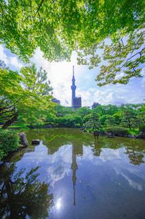 楓と東京スカイツリーの写真・画像素材[2107442]