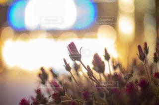 ネオンに照らされる花の写真・画像素材[2144539]