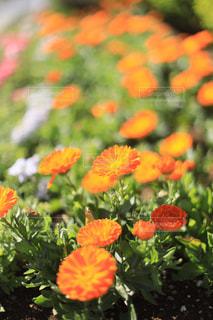 オレンジの花の写真・画像素材[2144546]