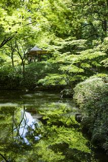 水面に映る緑の写真・画像素材[2144554]