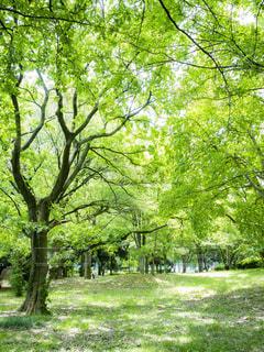 緑豊かな公園の写真・画像素材[2144565]