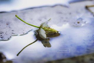 花の接写の写真・画像素材[2174937]