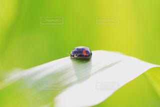 朝陽を浴びるテントウムシの写真・画像素材[2174941]