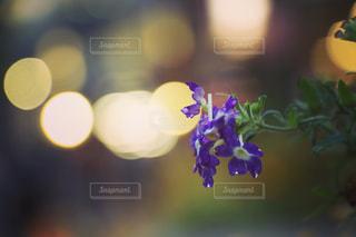 雨の夜に咲く花の写真・画像素材[2181791]