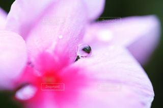 花と雫の写真・画像素材[2258534]