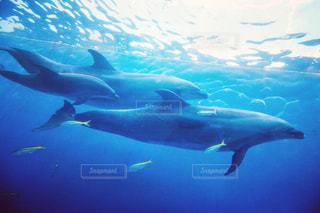 イルカの親子の写真・画像素材[2987614]