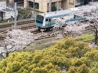 桜並木を走る電車の写真・画像素材[3068630]