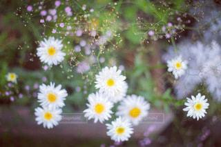 庭に咲く白い花の写真・画像素材[3420556]