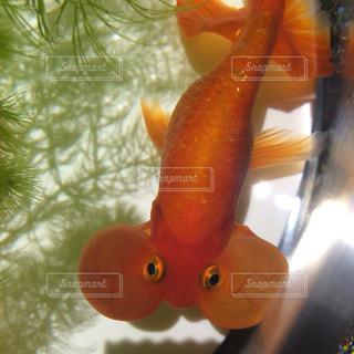水面下を泳ぐ魚たちの写真・画像素材[1027594]