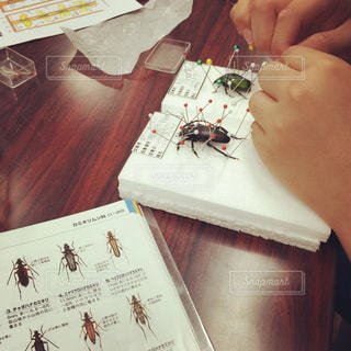 昆虫採集の写真・画像素材[791838]