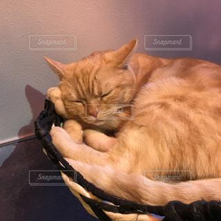 眠り猫の写真・画像素材[744239]